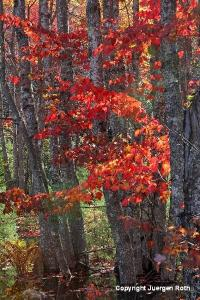 Fall Foliage Splendor in Acadia National Park