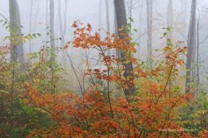 Fog Photography Image Tips