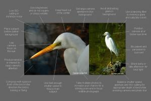 Bird Photography Tips