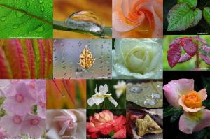 Awesome Raindrop Photography Art