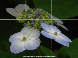 Composing by the Rule of Thirds Photography Guideline