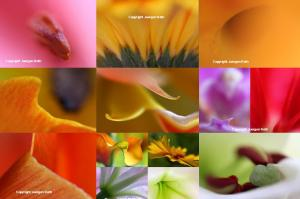 Abstract Flower Fine Art Photography