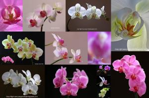 Orchid Flower Fine Art Photography