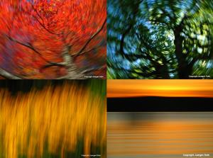 Mastering the Art of Intentional Camera Movement published by Apogee Photo Magazine
