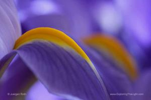Silent Muse - A Collection of Floral Portraits and Abstracts