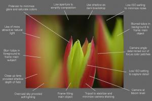 Flower Photography Tip