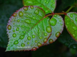 Leaf Macro Photography Tip