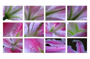 2010 Abstract Lily Fine Art Photography Calendar