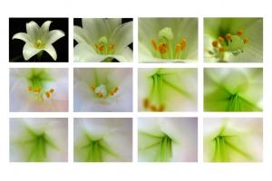 The Art Of Flower Photography By Juergen Roth Published By Apogee Photo Magazine