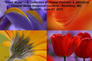 Silent Muse A Collection Of Floral Portraits And Abstracts