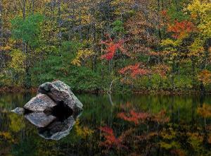 Fall Foliage By Nature Photographer Juergen Roth