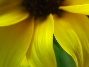 Collection Of Flower Fine Art Photographs