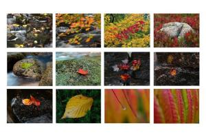 2011 Fall Colors Calendar