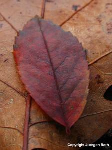 Tree Leaf Photography Gallery