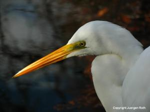 Florida Nature Photography Gallery